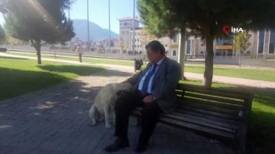 Sokak köpeği kendisini zorla böyle sevdirdi