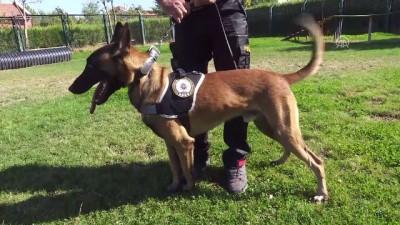 Polisin 'sağ kolu' görev köpekleri (1) - ANKARA