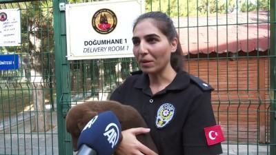 Polisin 'sağ kolu' görev köpekleri (2) - ANKARA