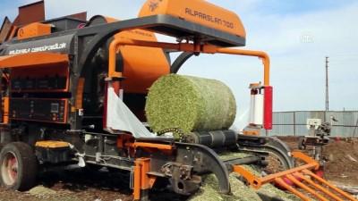 hanli - Silajlık mısır hasadı başladı - HATAY