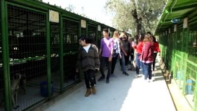 Öğrenciler harçlıkları ile köpeklere mama aldı kulübe yaptırdı