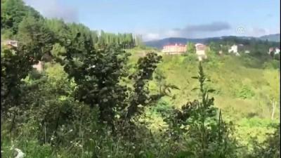 Tedavi edilen 4 kızıl şahin doğaya salındı - ORDU