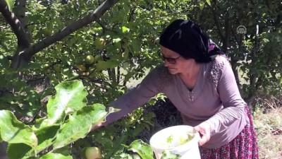 ekince - Elmaları değerlendirmek için başladı şimdi Türkiye'ye satıyor - AMASYA