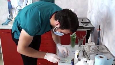 Yaralı kaplumbağa diş dolgu malzemesiyle yaşama tutundu - AĞRI