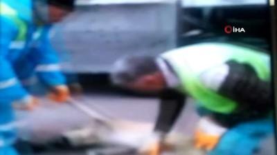 hayvan -  Başkent'te 20 kadar sokak köpeği zehirlendi