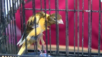 gesi -  'Kanarya ve Kafes Kuşları Yarışması' renkli görüntülere sahne oldu