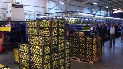 Limonda üretim arttı fiyatlar düştü - MUĞLA