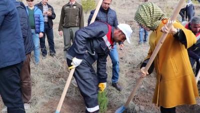 Sivas'ta 16 yılda 84 milyon fidan dikildi