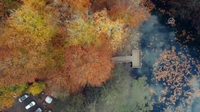 Tabiatın kalbinde sonbahar güzelliği - BOLU