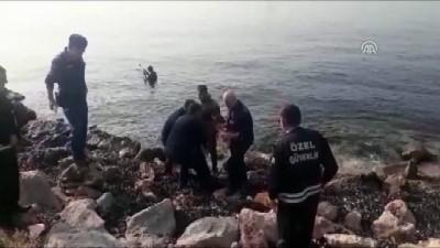 jandarma - Köpeklerden kaçarken denize atlayan ceylan kurtarıldı - KOCAELİ