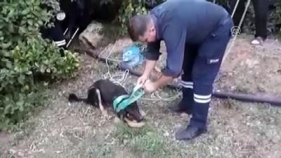 Kuyuya düşen yavru köpekleri itfaiye kurtardı - MERSİN