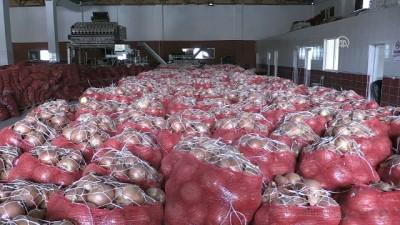 'Spekülatörler kuru soğan fiyatlarını yükseltmeye çalışıyor' - AMASYA