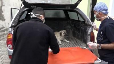 Ayakları tutmayan köpek tedavi altına alındı - VAN
