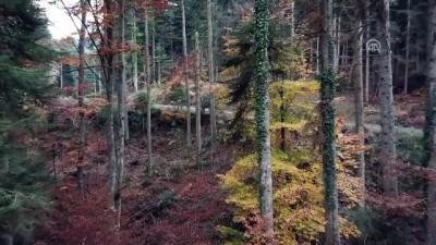 Bozüyük'te sonbaharda renk cümbüşü - BİLECİK