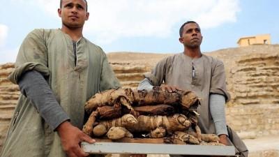 Mısır'da yeni keşif: Mumyalanmış kediler ve gübre böcekleri