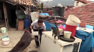 Sahipsiz hayvanların koruyucu meleği - BİLECİK