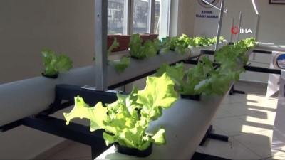 Kayseri'de topraksız tarım yapılacak