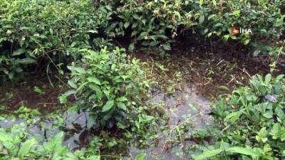 Şiddetli yağmur sonrası tarım arazilerini ve bir evi su bastı