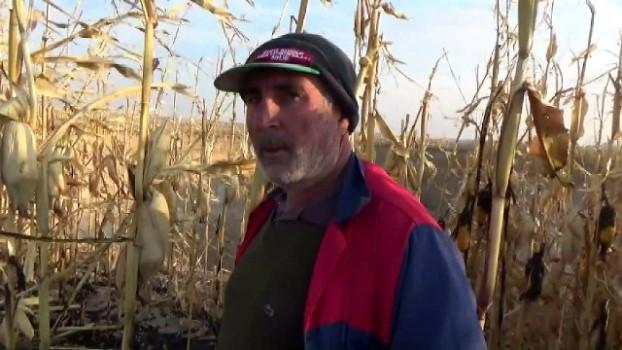 misir tarlasi - Mısır hasatı bitince dev obruk ortaya çıktı - KONYA
