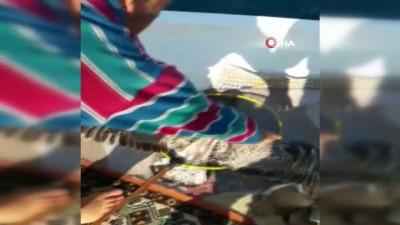 Talihsiz martı ava giderken av oldu