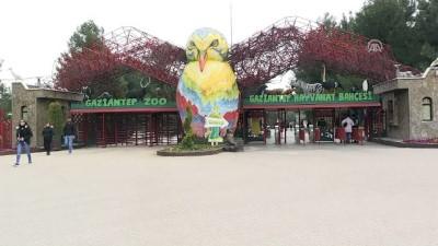 Gaziantep Hayvanat Bahçesi'nde ziyaretçi rekoru