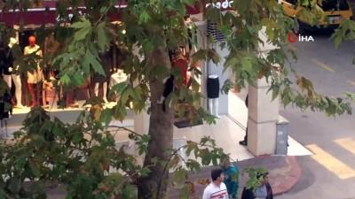 Ağaçta mahsur kalan kedi için kedi gibi ağaca tırmanıp kurtardı
