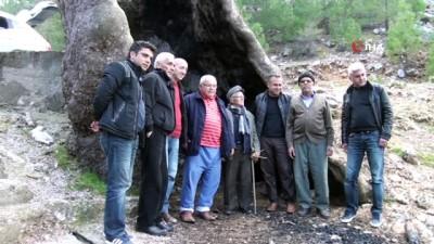 Yıldırım düştü, vatandaş yaktı ama çınar ağacı 700 yıldır ayakta kalmayı başardı