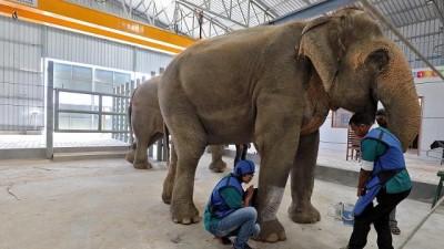 Video   Hindistan'ın ilk fil hastanesi açıldı