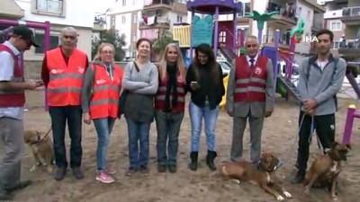 Çocuk parkında patileri kesilerek köpeği öldüreni ihbar edene para ödülü