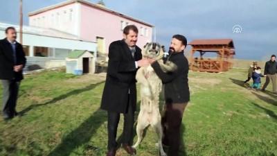 'Kangal köpeğini hak ettiği yere getireceğiz' - SİVAS Haberi