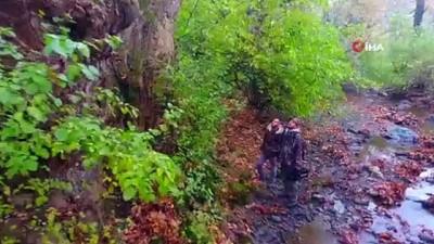 Tam 600 yaşında olduğu düşünülüyor,Türkiye'nin en yaşlı çınarı bulunmuş olabilir...Çınarın bulunduğu Longoz Ormanları havadan görüntülendi
