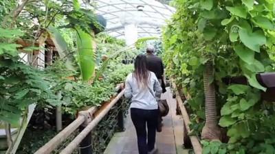 Kelebek Bahçesi'ndeki bitkilere bebek gibi bakılıyor - KONYA