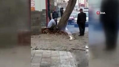 İş yeri önündeki çınar ağacını kesen esnafa bin lira ceza