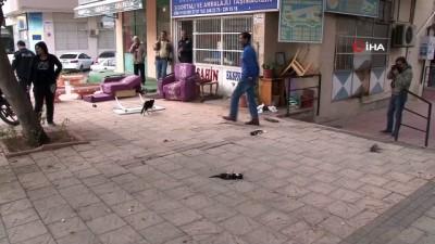 yavru kedi -  Aç kalan köpekler, yavru kedileri böyle parçaladı