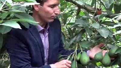 Avokadoda Romanya'ya ilk ihracat yapıldı