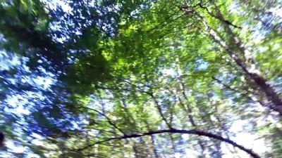 Longoz ormanlarında sonbahar güzelliği - KIRKLARELİ