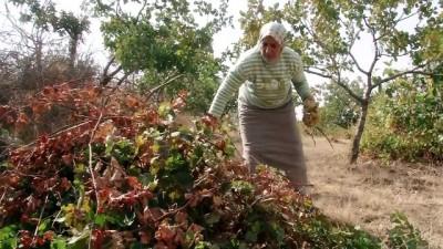 Siirt'in örnek kadın çiftçisi