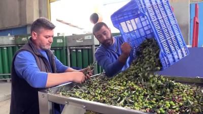 İtalya'dan zeytin sıkma makinesi istedi, gelmeyince kendisi üretti - İZMİR