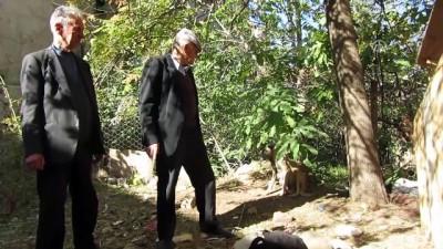 hayvan - Sahipsiz anne köpeğe mahalle esnafı sahip çıktı - AFYONKARAHİSAR