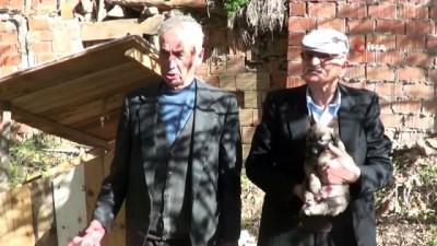 Sandıklı'da mahalleli sokak köpeklerini sahiplendi