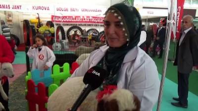 acilis toreni -  Adana'da Kuzu Güzellik Yarışması düzenlendi