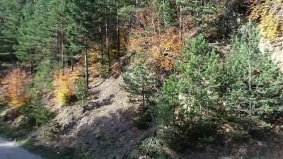 Kunduz Ormanları'nda sonbahar güzelliği - SAMSUN