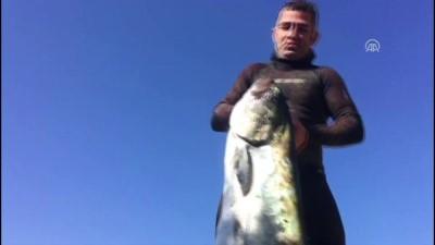 Zıpkınla 40 kiloluk liça balığı yakaladı - MUĞLA