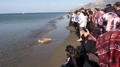 Sağlığına kavuşan deniz kaplumbağaları denizle buluştu - HATAY