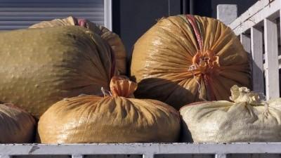 TMO 2 bin ton fındık aldı - ORDU