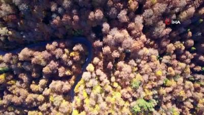 Yedigöller'de, sonbaharın getirdiği görsel şölen havadan görüntülendi