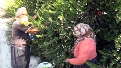 mersin -  30 yıl önce köye gelen öğretmen hayatlarını değiştirdi
