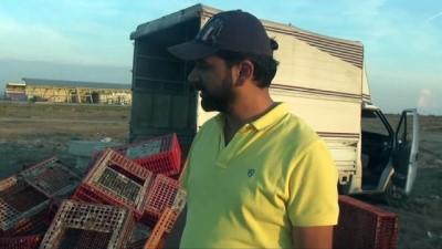 hayvan -  Manavgat'ta tavukların canlı canlı imha edildiği iddiası