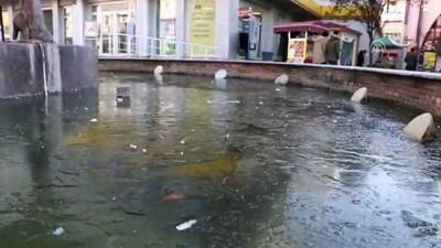 Soğuk hava nedeniyle süs havuzları buz tuttu - EDİRNE