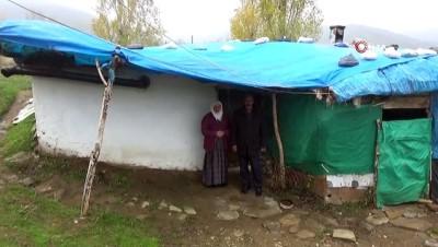 Ahırda geçen yaşam mücadelesi...Ahırda yaşayan çiftin tek hayali ev sahibi olmak